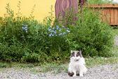 Pretty Wild Cat — Stock Photo