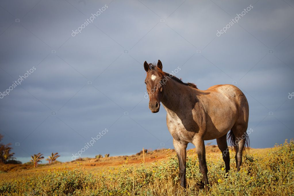 Low Angle View of a Horse in the Morning sun with a cloudy sky — Stock Photo #12379762