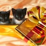 Fluffy little kittens — Stock Photo #11700247
