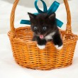 Stock Photo: Little kitten