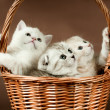 Kittens — Stock Photo #11701031