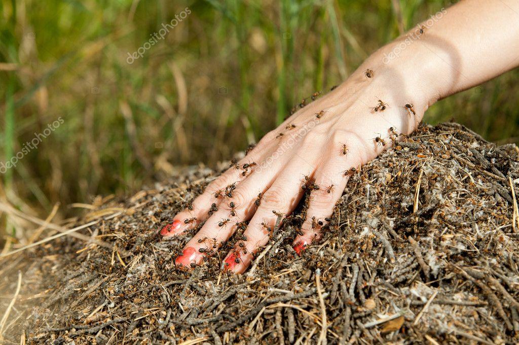 просматриваете соник когда снятся муравьи Предлагаем аренду двухуровневый