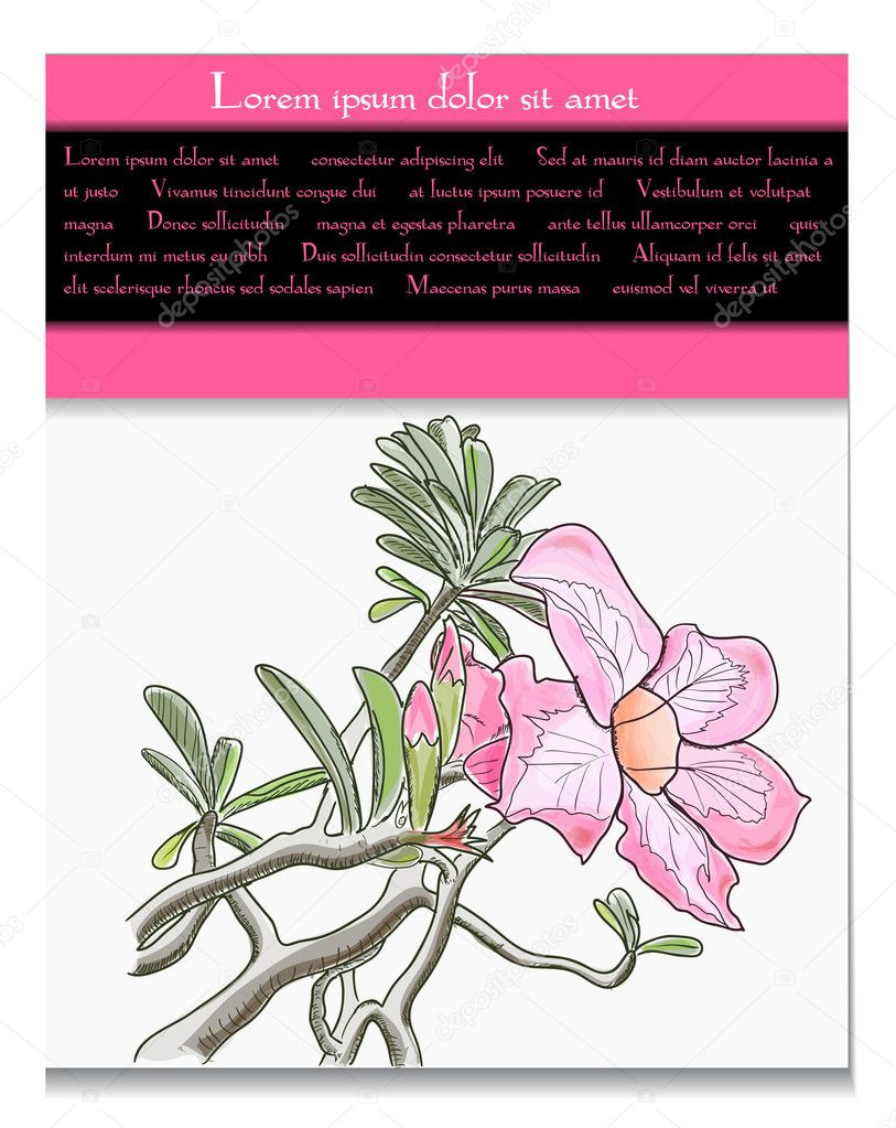 Vector card with tropical flower. EPS10 illustration — Векторная иллюстрация #11411623