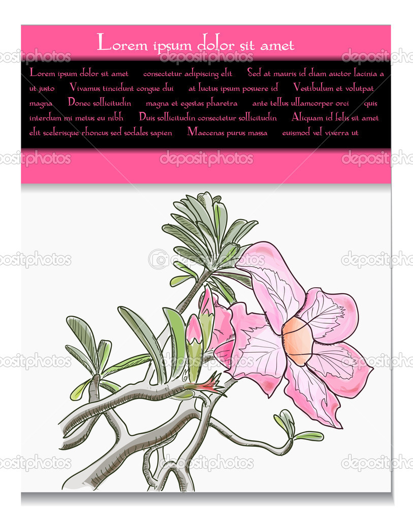 Vector card with tropical flower. EPS10 illustration — ベクター素材ストック #11411623