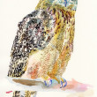 Original watercolor painting of bird, owl on a branch — Stock Photo
