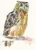 Original watercolor painting of bird, owl on a branch — 图库照片