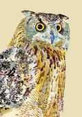 Watercolor painting of bird, owl. — Stockvector