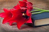Red tulips on an old book — Stock Photo