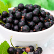 Fresh blackcurrant in bowl — Stock Photo