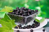 Fresh blackcurrant in bowl — Stock Photo