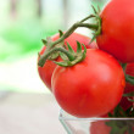 Freshly harvested summer cherry tomatoes — Stock Photo