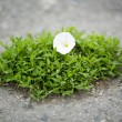 Piece of grass on the ground — Stock Photo