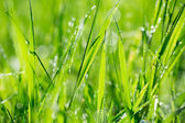 Blade of grass in morning dew — Stock Photo