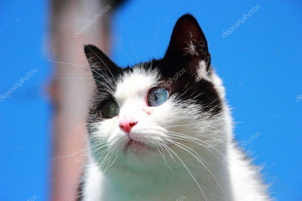 不同的眼睛的猫 — 图库照片08metanna#11618528