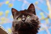 Black fluffy cat — Stock Photo