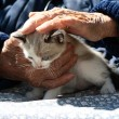 Stock Photo: Old hands pet kitten