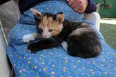 子猫と一緒に座っている年配の女性 — ストック写真