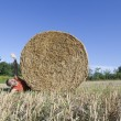 Hay bale funny tragedy — Stock Photo