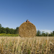 Man laying on a Hay bales — Stock Photo #11849512