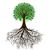 Carvalho com raízes e folhagem densa, vetor — Vetorial Stock