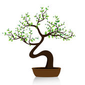 Bonsai tree on white background — Stock Vector
