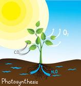 Imagen vectorial de fotosíntesis — Vector de stock