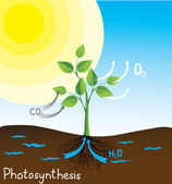 Immagine vettoriale fotosintesi — Vettoriale Stock