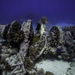 Winch on Molasses Reef in Key Largo, Florida — Stock Photo