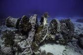 Winch on Molasses Reef in Key Largo, Florida — Stockfoto
