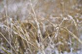 Herbs in snow — Stock Photo