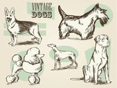 Vintage Dog Etchings — Stock Vector