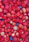 Photo gros plan de petites fraises des bois — Photo