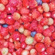 Close-up photo of little wild strawberries — Stock Photo
