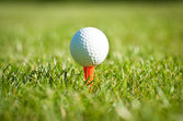 Close up of golf ball on a tee — Stock Photo