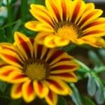 Yellow flowers — Stock Photo #10864403