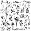 Set of  vector floral elements — Stockvectorbeeld