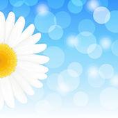 Daisy And Sky — Stock Vector