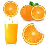 Orange Fruit Set — Stock Vector
