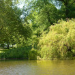 Pond in Het Park in Rotterdam - Stock Photo
