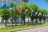 Avenue of flags in Hague — Stock Photo