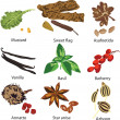 Set of different spices — Stock Vector