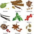 Set of different spices - Stock Vector