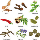 Set of different spices — Vecteur