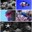 Salt water aquarium with coral reef and tropical fish — Stock Photo