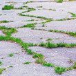 Cracked asphalt surface — Stock Photo #11376893