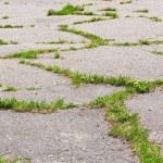 Old asphalt — Stock Photo #11443652