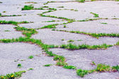 Cracked asphalt surface — Stock Photo