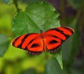Czerwony motyl — Zdjęcie stockowe