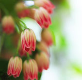 Small red flowers — Stock Photo