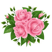 Vector illustration of pink roses — Stock Vector